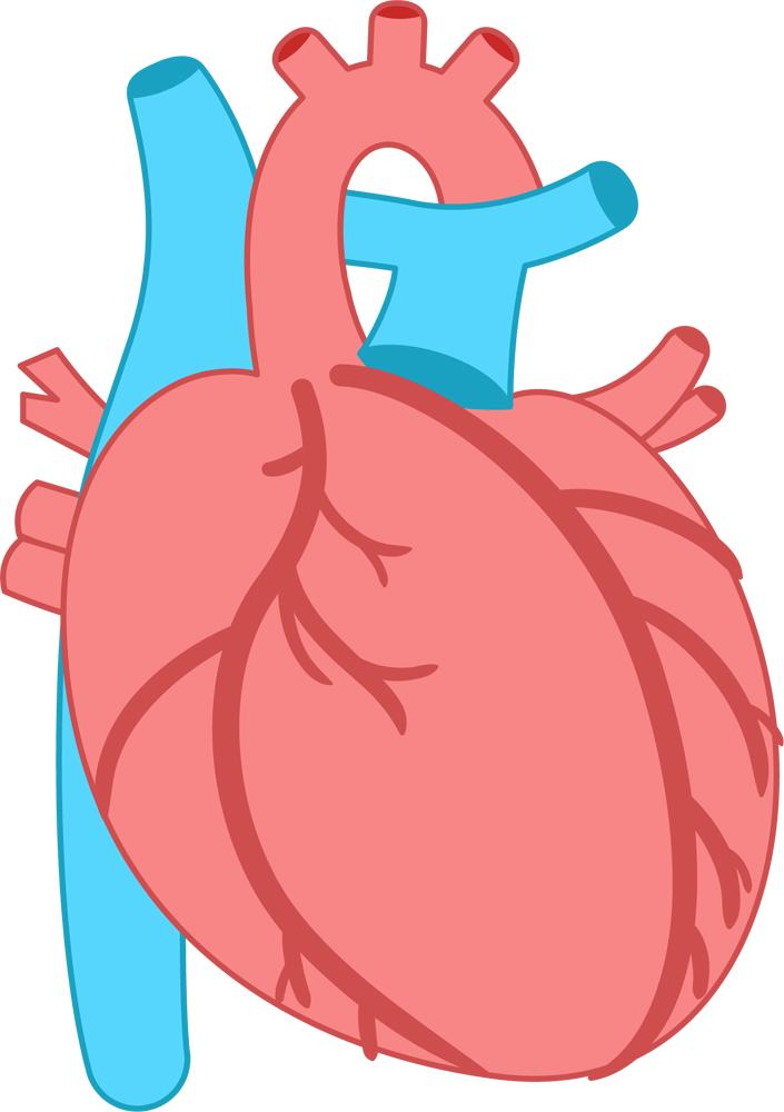 糖質制限で脂質を摂りすぎると動脈硬化になるの?